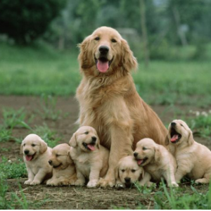 Pup Family