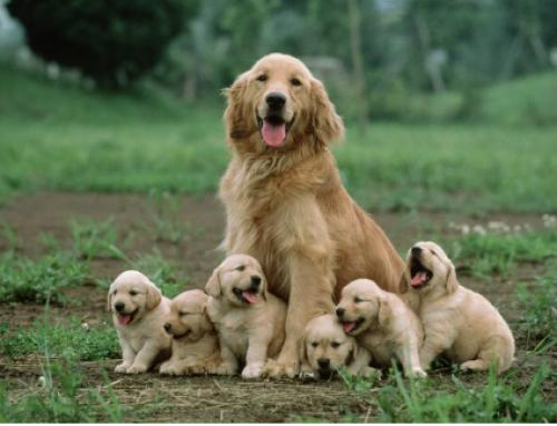 Family as a Protective Factor